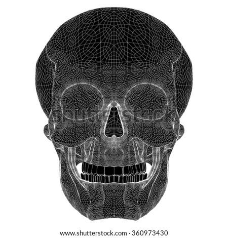 Human Skull Vector - stock vector