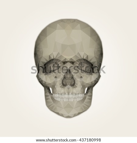 Human skull. Vector illustration.