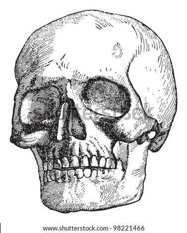 Human skull / vintage illustration from Meyers Konversations-Lexikon 1897