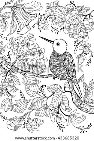 Hummingbirds And Flowersoutline Drawingcoloring Circling Line Drawingmonochrome