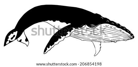 Humpback whale (monochrome color) - stock vector