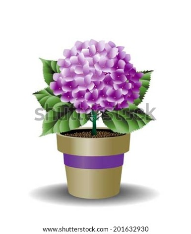 Hydrangea in pot with ribbon
