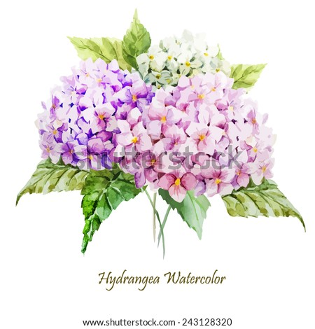 hydrangea, watercolor, flowers, greeting card, bouquet - stock vector