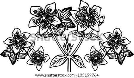 Hypericum2 engrawing picture. Vector illustration - stock vector