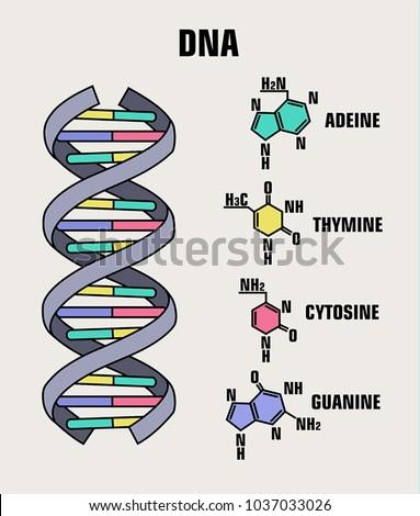 Icon Structure Dna Molecule Spiral Deoxyribonucleic Stock Vector