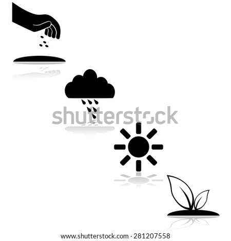 Icon set showing the steps needed for a plant to grow, with seeding, rain and sunshine