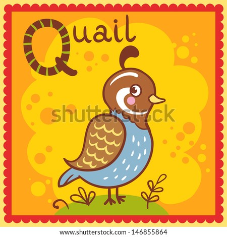 Illustrated alphabet letter Q and quail.  - stock vector