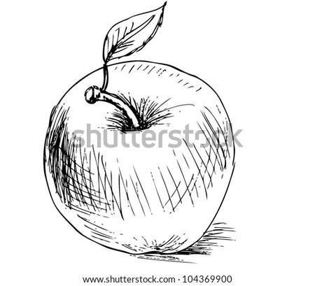 Illustration - apple - stock vector