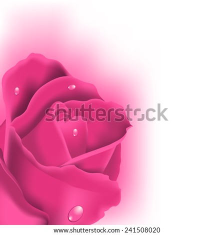 Illustration celebration card with pink rose, copy space for your text - vector