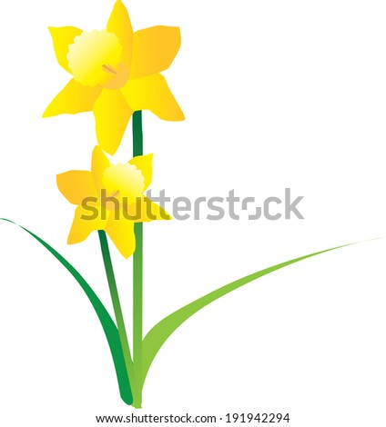 illustration cut out of yellow daffodils - stock vector