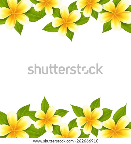 Illustration decoration frame made in frangipani (plumeria), ornament with exotic flowers on white background - vector - stock vector