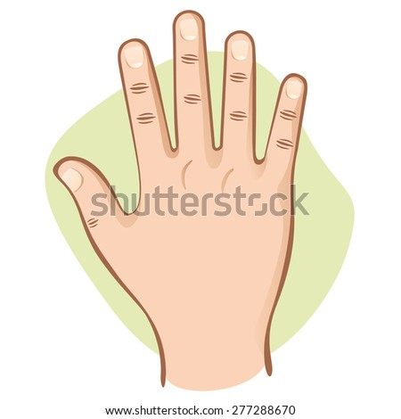 Illustration is part of the human body, hand open top view. Ideal for educational material and institutional - stock vector