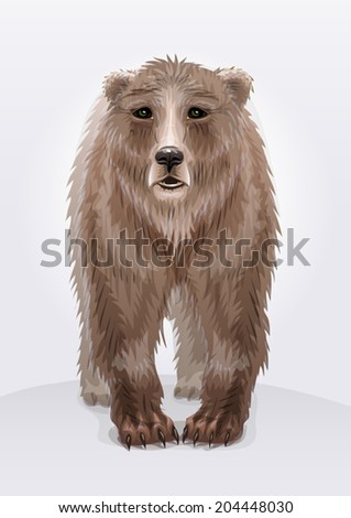 Illustration of a brown bear or grizzly on light background  - stock vector