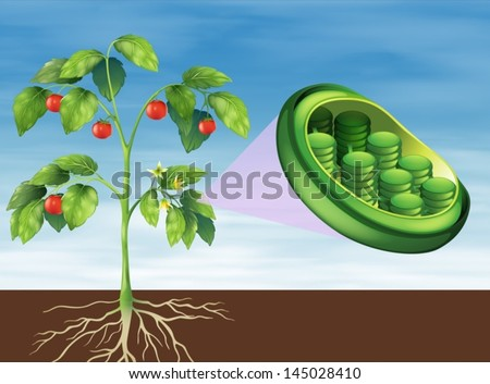 Illustration of a Chloroplast in plant - stock vector