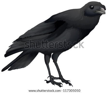 Illustration of a Corvus coronoides on a white background - stock vector