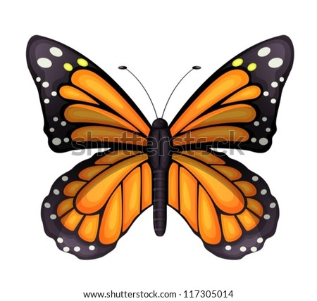 Illustration of a Danaus plexippus on a white background