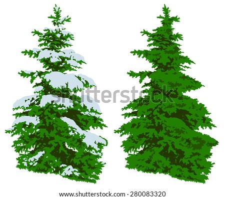 Illustration of a green pine tree in winter in the snow and in the summer on a white background