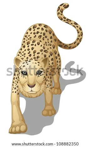 illustration of a leopard on a white background - stock vector