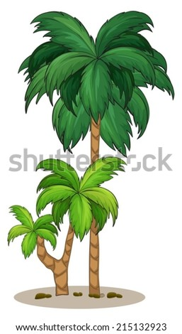 Illustration of a palm tree on a white background