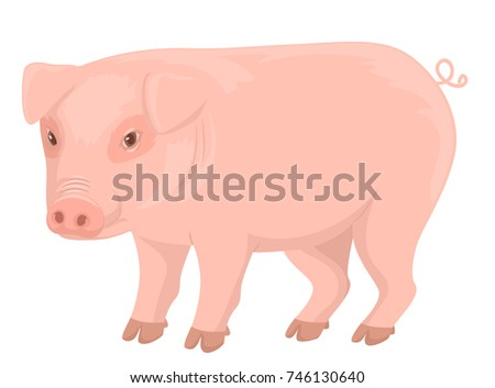 Illustration of a Pink Pig Standing