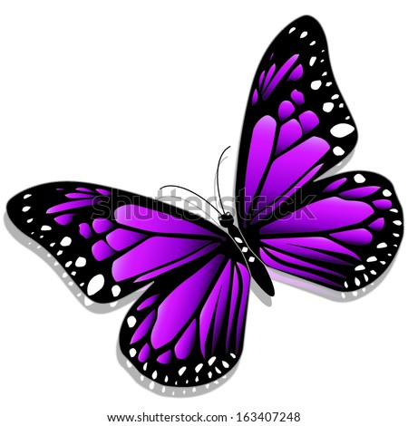 purple butterfly stock images royaltyfree images