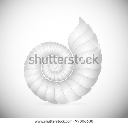 Illustration of a sea shell clam. Eps 10