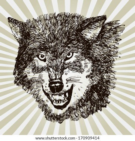 Illustration of a Wolf - stock vector