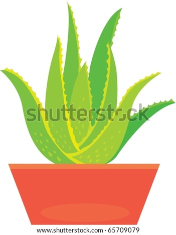 illustration of aloe vera plant on a white background - stock vector