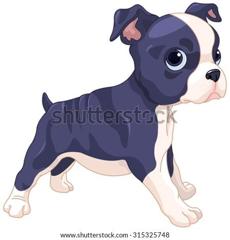 Illustration of cute Boston Terrier cub - stock vector