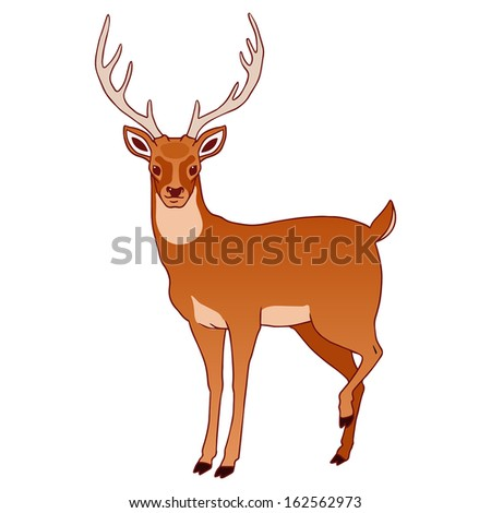 Illustration of deer isolated on white.