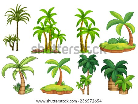 Illustration of different kind of palm trees - stock vector