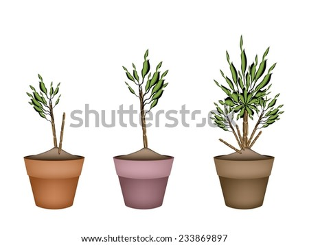 Illustration of Dracaena Plant or Yucca Tree in Terracotta Flower Pot for Garden Decoration.