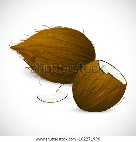 illustration of dry coconut on white background