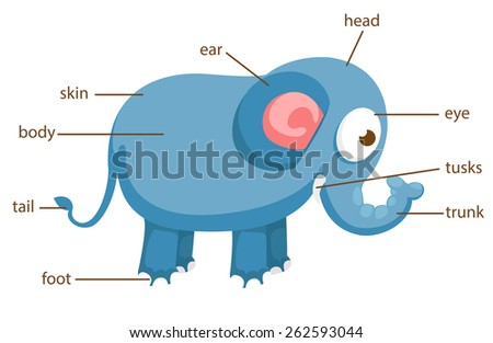 Animal Body Parts Stock Images, Royalty-Free Images & Vectors ...