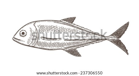 Illustration of fish (jack) in sketch style, white vintage edition - stock vector