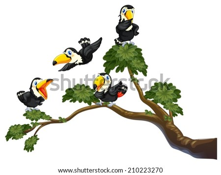 Illustration of four toucans on the tree - stock vector
