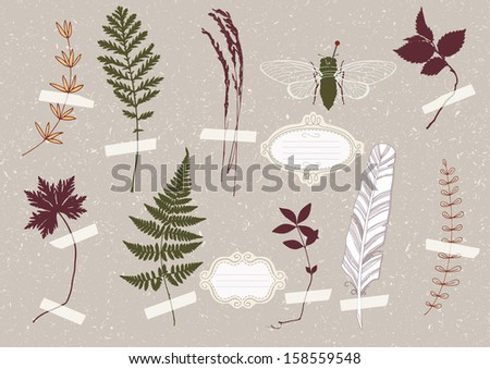 Illustration of green beetle in the herbarium - stock vector