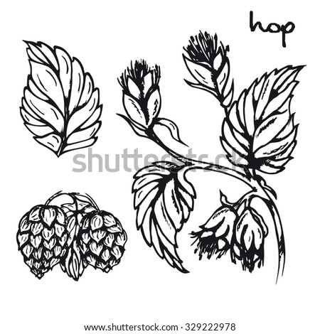 Illustration of healing herbs. Hop black and white vector isolated. Sketch hop medicinal plant. Hand drawn illustration for print, decoration, image, design, label  - stock vector