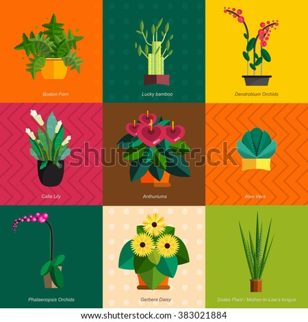 Illustration of houseplants, indoor and office plants in pot. Dracaena, fern, bamboo, spathyfyllium, orchids, Calla lily, aloe vera, gerbera, snake plant, anthuriums. Flat plants, vector icon set - stock vector