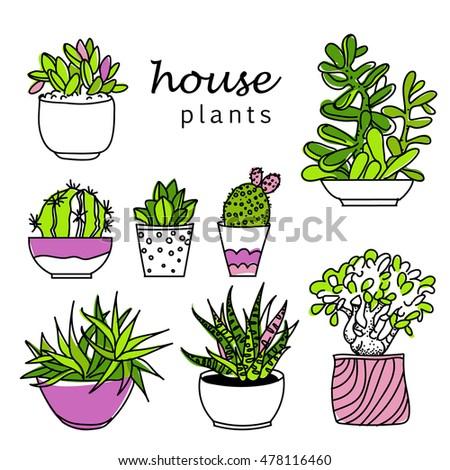 Selection Plants Office Vector Illustration Anthurium