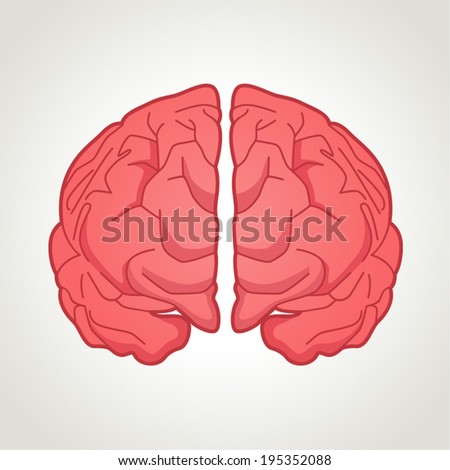 Illustration of human brain - stock vector