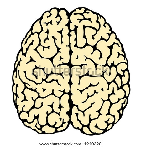 illustration of human brain at white background - stock vector