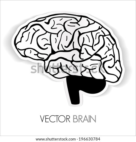 illustration of human brain, Vector graphic - stock vector