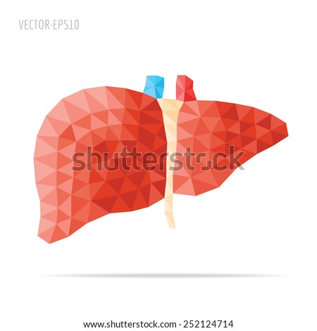 Illustration of human liver with faceted low-poly geometry effect, vector - stock vector