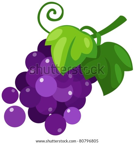 illustration of isolated grapes on white background - stock vector