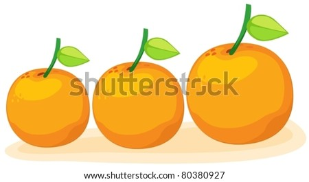 illustration of isolated group of oranges - stock vector