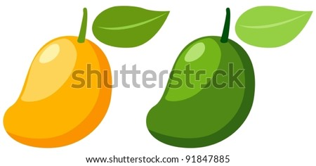 illustration of isolated  two mangoes  on white background - stock vector