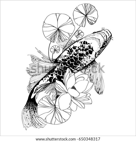 Koi stock images royalty free images vectors shutterstock for Japanese coy fish