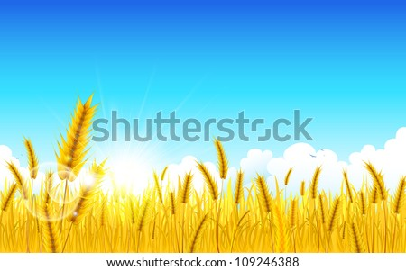 illustration of landscape of golden wheat farm - stock vector