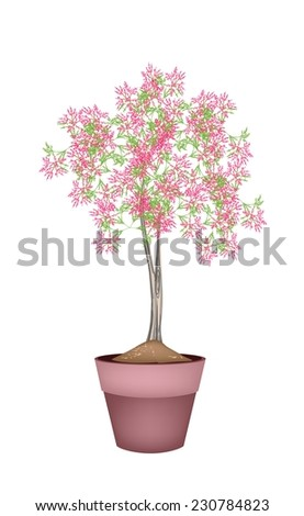 Illustration of Landscaping Tree Symbol or Isometric Tree and Plant of Beautiful Pink Flower in A Terracotta Flowerpot, for Garden Decoration